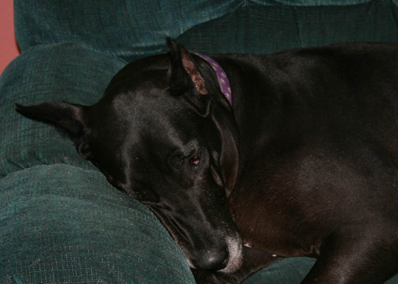 Gemini crashed out on the couch