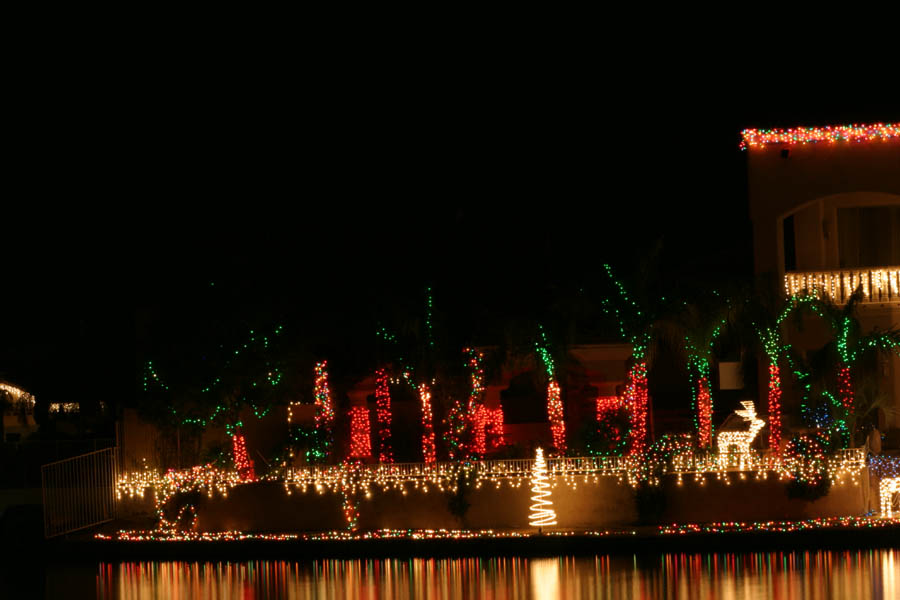 Forest of palms at Christmas (125mm, f/25, 30 sec)<!--CRW_1865.CRW-->